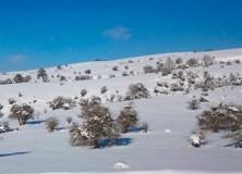 Día de la nieve de Sakana 2018