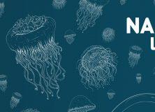 Nanoipuin  Lehiaketa  |  2019